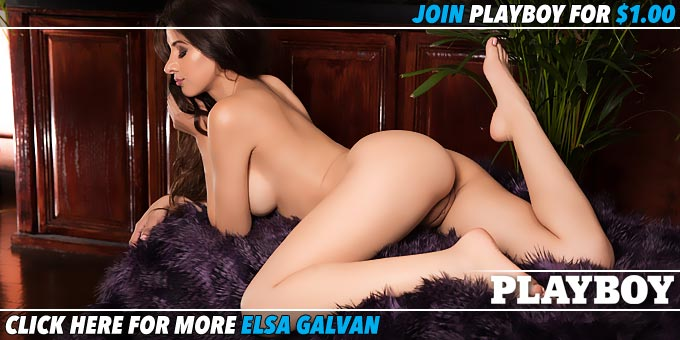 Feisty Fox Elsa Galvan Banner